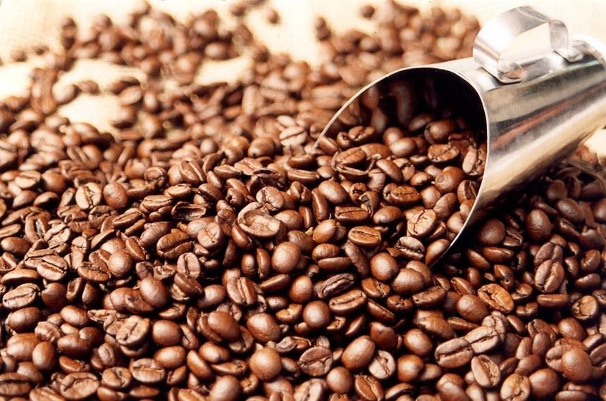 Resultado de imagem para café produção