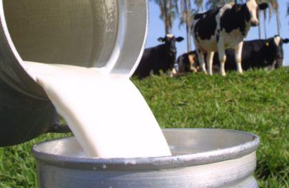 bovinocultura-leite-reproducao