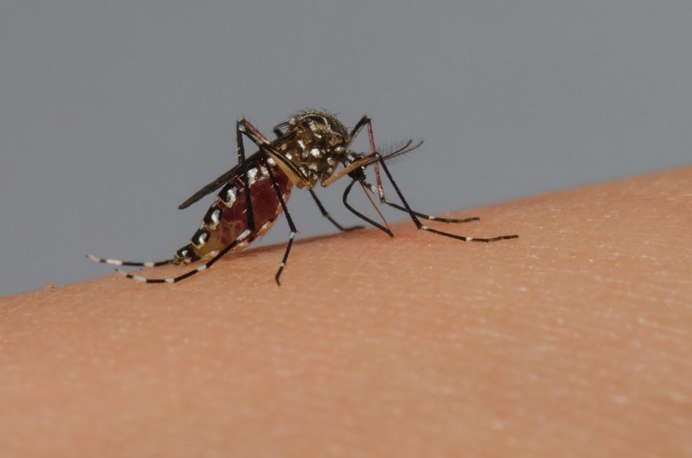dengue-reproducao