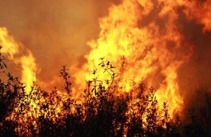 incendio-reproducao