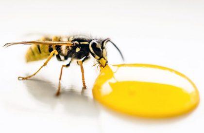 abelhas-reproducao