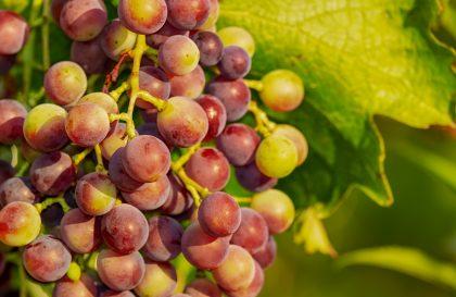 grapes-3555214_1280