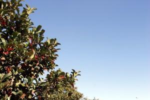 Outono deixa suas marcas na paisagem: folhas em tons marrons é o sinal mais popular da estação