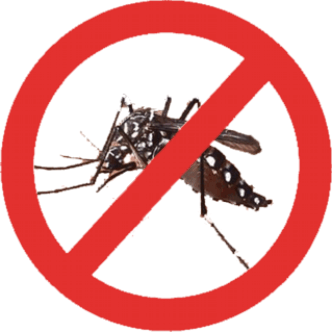 dengue phato Dengue fever symptoms and signs include rash, fever, chills, fatigue, headache, and joint pain read about causes, history, transmission, diagnosis and treatments, and see pictures of this.