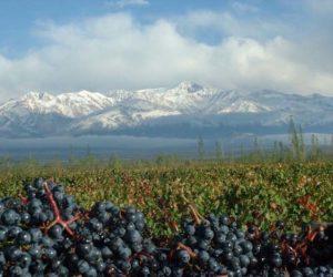 vinicola-em-santiago-chile