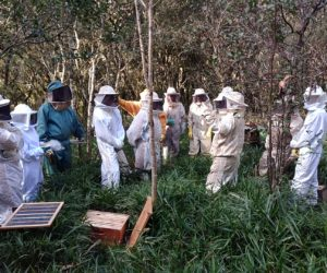 epagri-apicultores-colmeia2