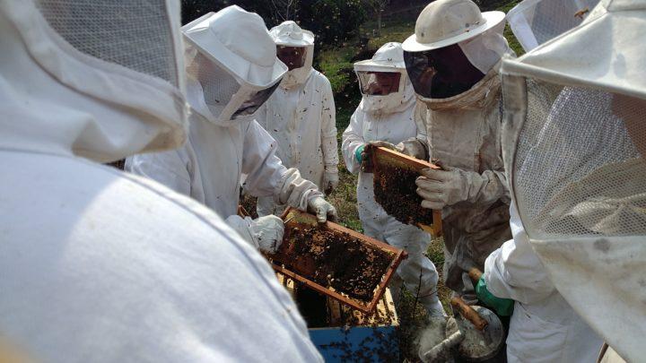 epagri-apicultores-portouniao (2)
